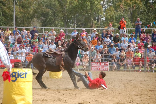 Benson, Carolina del Norte: Mule Days Festival