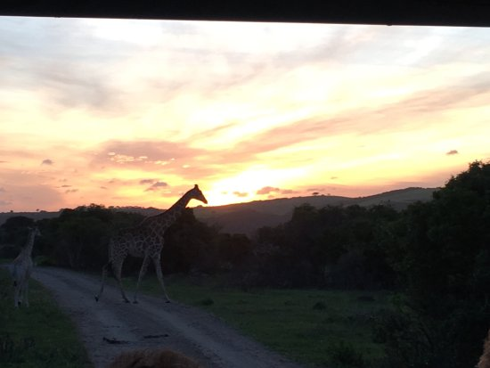 Sibuya Game Reserve & Tented Camp: photo0.jpg