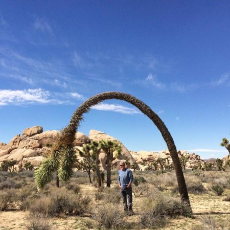 Twentynine Palms, CA: A Different Kind of Rubber Tree.