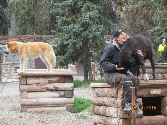 Sled Dog Demonstration: Ranger loves dog, dog loves ranger