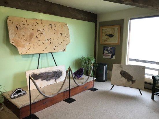 Ulrich's Fossil Gallery: photo1.jpg