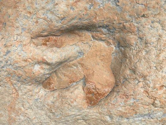 Ulrich's Fossil Gallery: photo2.jpg