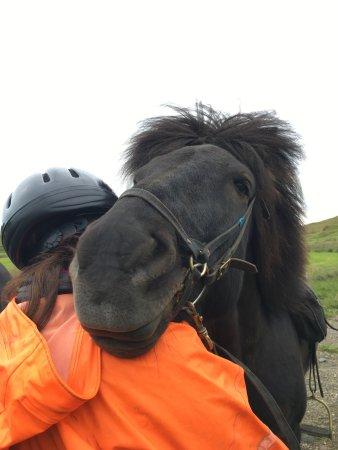 Fludir, Исландия: They were so sweet.