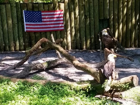 Homosassa Springs, FL: Eagle