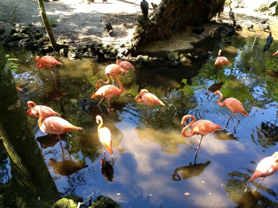 Homosassa Springs, Floride : Flamingo's