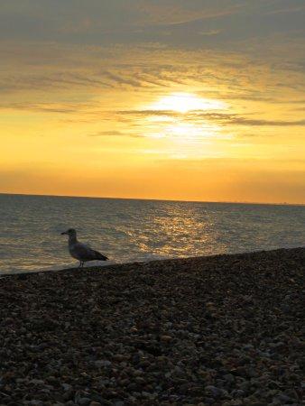 Gull on Brighton Beach at Sunset (24/Sept/16).