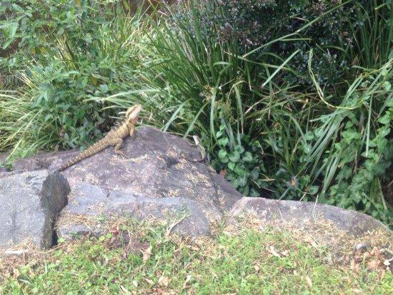 Maleny, Avustralya: photo2.jpg