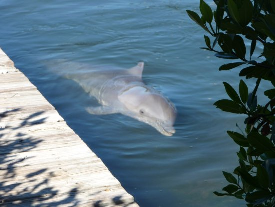 Foto de Dolphin Research Center