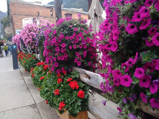 Telluride, Κολοράντο: flowers and colours in main street