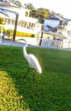 Hudson, Floryda: 20160924_084053_large.jpg