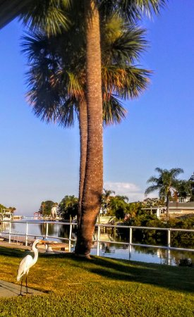 Hudson, Floryda: 20160924_083057_large.jpg