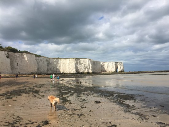 Kingsgate, UK: White cliffs and a happy doggy