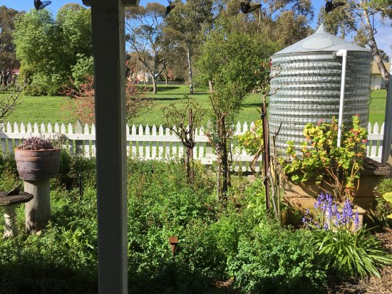 Penola, Australia: Backyard of cottage - view from Kitchen/dining