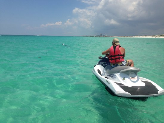 Visit Shell Island Dolphin Tours Pcb Fl