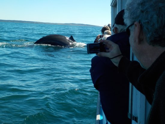 Mariner Cruises: Whales off the starboard quarter!
