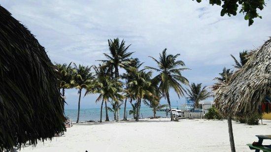Caye Caulker, Belize: IMG-20160925-WA0005_large.jpg