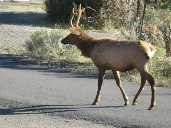 Mammoth Campground : Afternoon visitor