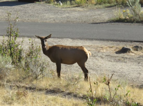 Mammoth Campground : Morning campground visitor