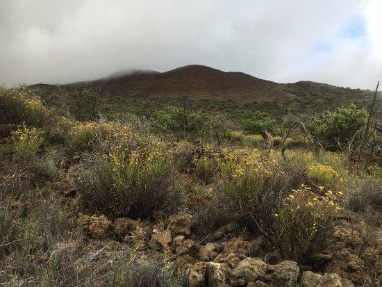 Maunakea Visitor Information Station : Mauna Kea from Ka'ali'ali trail