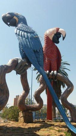 Araras Square