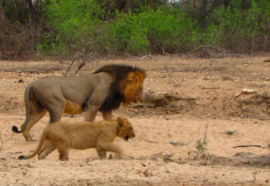 Monwana Game Lodge: Taking lessons from Dad