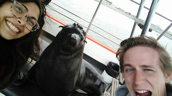 "‪‪Walvis Bay‬, ناميبيا: Selfie with our new pet seal ""Necklace""‬"
