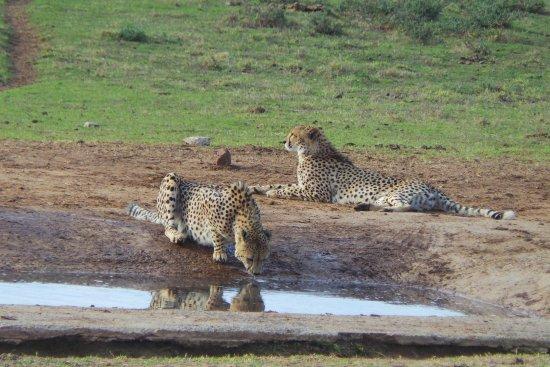 Addo Elephant National Park, Sudáfrica: leopards