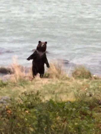 Haines, AK: photo0.jpg
