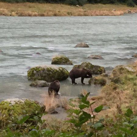 Haines, AK: photo1.jpg