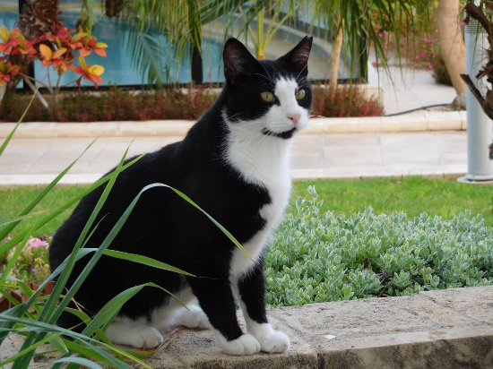 Louis Ledra Beach: One of the cats meow