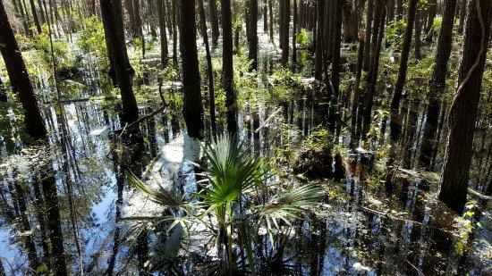 Murrells Inlet, Carolina del Sur: 20160925_014933_large.jpg