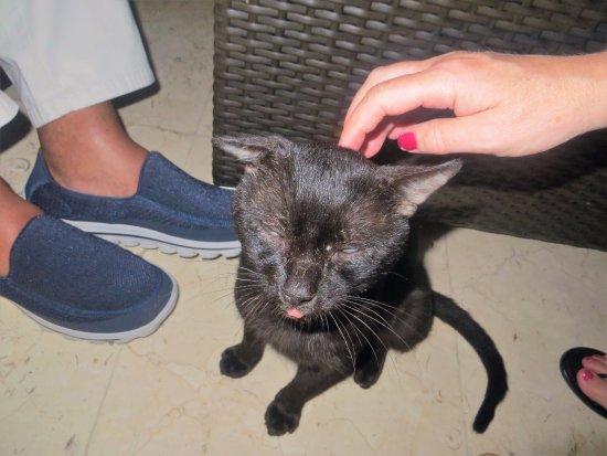 "Paradisus Rio de Oro Resort & Spa: Old Paco the ""tatty"" cat,"