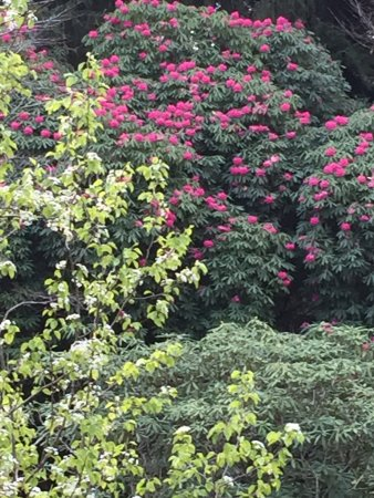 National Rhododendron Gardens: So much colour everywhere you look...