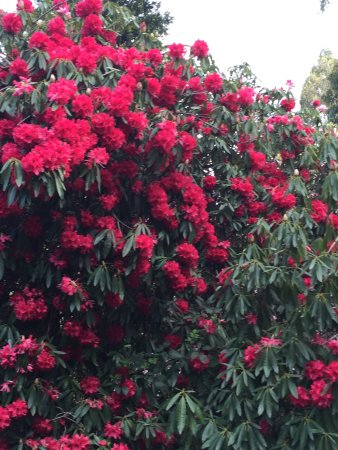 Olinda, Australien: So much colour everywhere you look...