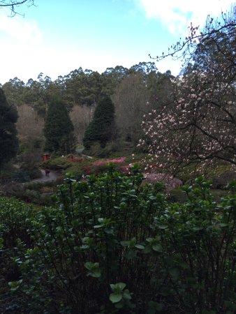 Olinda, ออสเตรเลีย: So much colour everywhere you look...
