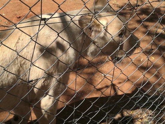 Hartbeespoort, Sør-Afrika: IMG_20160925_101604_large.jpg