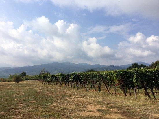 Mittelwihr, Frankrike: В замечательных пейзажах вызревает замечательный виноград
