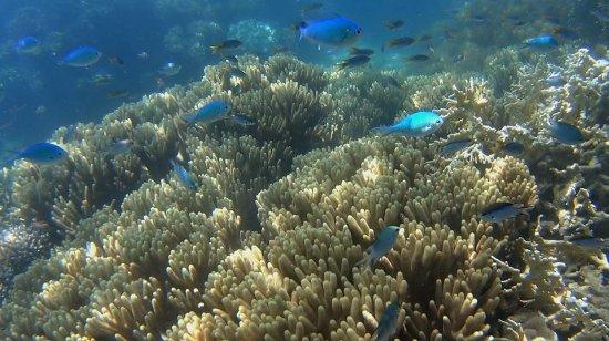 S.V. Domino: Bali Hai Reef. PBP Photos By Passy  www.photosypassy.com photosbypassy@hotmail.com