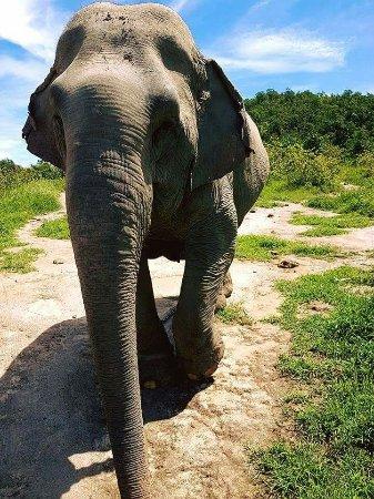Hutsadin Elephant Foundation: FB_IMG_1474871485442_large.jpg