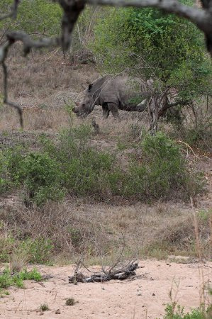 George, Sudáfrica: If you get the chance to go on a bush walk, take it. We saw this rhino and calf before they saw