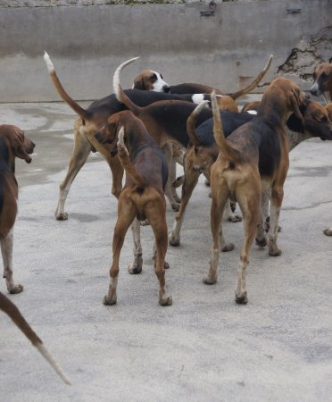 Cheverny, Prancis: De jachthonden