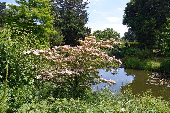 Enfield, UK: Carp Lake