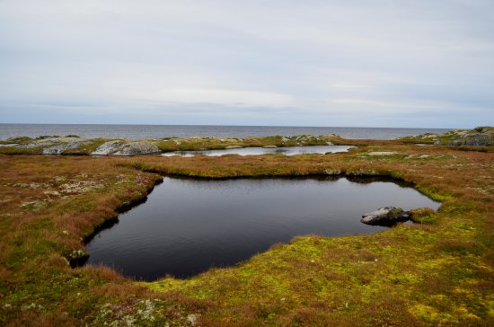 Red Bay, Canadá: Bog marshes with fresh water ponds