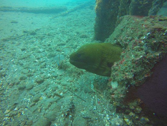 Padangbai, Indonésie : Monster eel