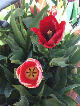 Floriade: photo5.jpg