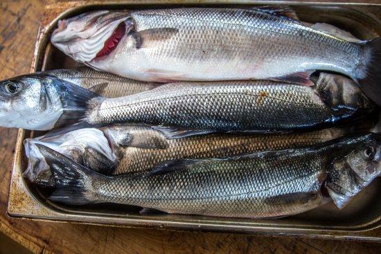 Mousehole, UK: Fresh Sea Bass