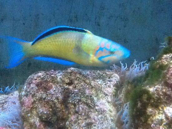 Porto Pim Aquarium: Different !