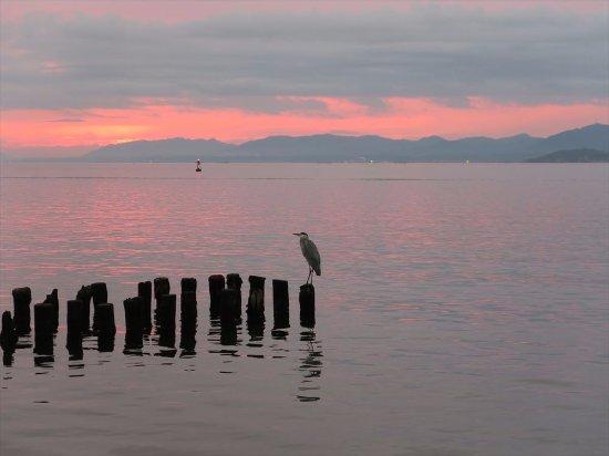 Shimane Art Museum: the Shinji lake