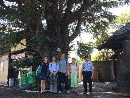 Arakawa, Jepang: Ceder Tree
