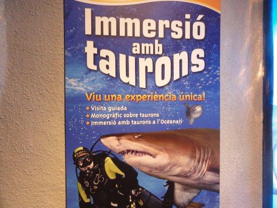 Barcelona aquarium manifesto del bagno con gli squali - Bagno con gli squali sudafrica ...